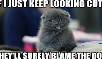 25 Memes About Cats and Dogs That Every Pet Owner Will Love