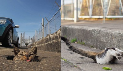 Stray Cats in Japan Use Street Holes as Their Own Personal Playground