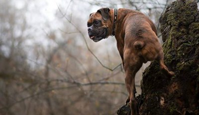 This Intrepid Doggo Will Make You Feel Lazy With All His Epic Hiking Pics