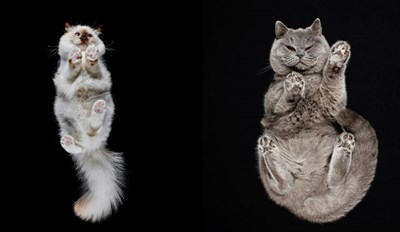 Get up Close and Personal With Fluffy Cat Bellies in This Unique Photo Series