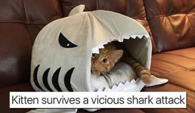 22 Cat Memes That Are Both Ridiculous and Hilarious