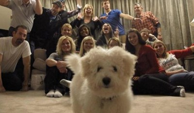 29 Dogs Who Are Photobombing Jerks
