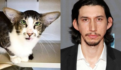 22 Animals Who Looks Exactly Like Famous People
