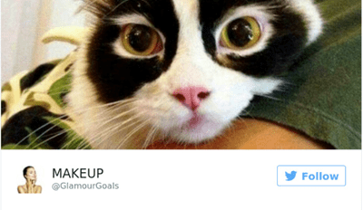 Funny tweet of pretty cat that looks like she watches make up videos on youtube - cover photo for funny tweets about cats.