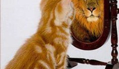 Picture of a cute ginger orange kitten staring into the mirror and seeing a lions reflection - cover photo for a list of funny cats and dogs that spot their reflections