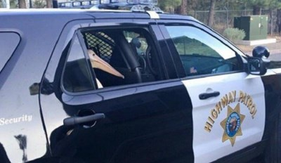 pelican riding in a police car and other pictures who's lack of context makes them the more hilarious