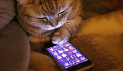 A picture of a ginger cat looking at an iphone- over photo for a list of funny conversations between a cat and its owner.