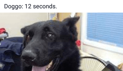 20 hilarious posts shared by police officers in Australia are sweeping the internet - Dog calling police to report owner gone for a while 12 seconds.