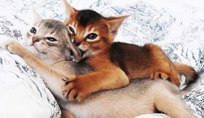 Cute picture of two kittens on a bed, biting each other's ear.