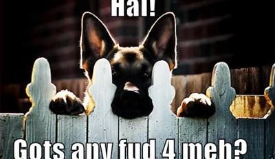 Hai!  Gots any fud 4 meh?