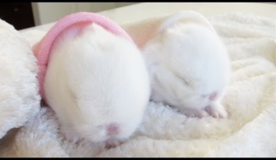 A New Generation of Baby Easter Bunnies is Born!