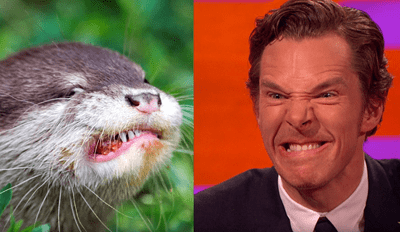 Benedict Cumberbatch Still Totally Looks Like an Otter