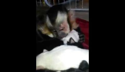 This Monkey Can't Resist These Cute Newborn Puppies