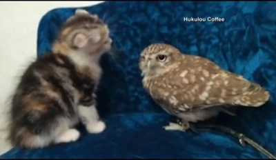 A Kitten and an Owl are Best Friends