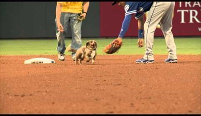 This Excited Dog Wins a Race and Proceeds to Show Off by Running Around the Field