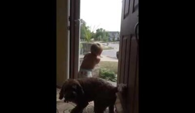 This Baby and Dog's Reaction to Dad Getting Home is Exactly the Same