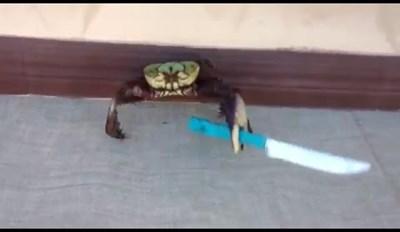 Heil Knife Crab