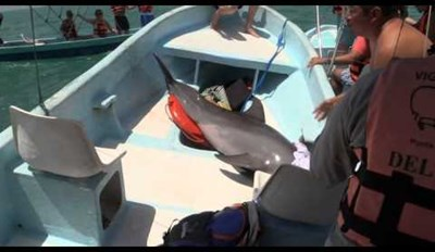 How Do You Save a Boat-Jumping Dolphin? Start By Giving It the Wet Shirt Off Your Back