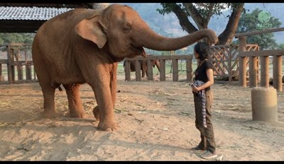 Elephant Falls Asleep Whenever Her Caretaker Sings a Lullaby