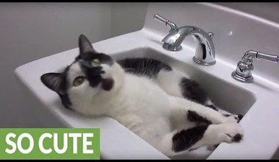 Playful Cat Just Wants to Hang Out in the Sink All Day