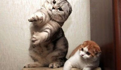 Funny Cat Videos Can Only Get Better When You Add Popular Music