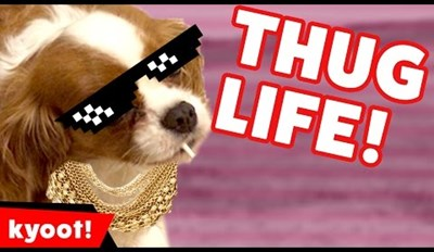 These Thug Life Animals Are Officially out of F-cks to Give