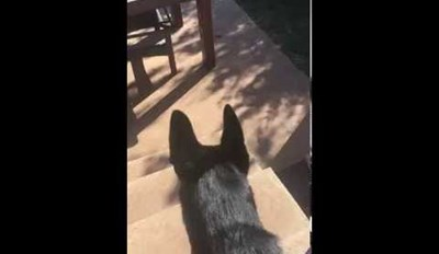 This Dog Can Teach Kids A Neat Trick!