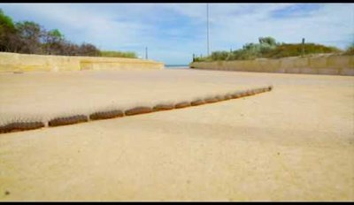 Mesmerizing Time Lapse Video Captures Caterpillars Crossing a Footpath
