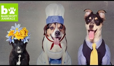 Rescue Dogs Get Dressed up Like People for Their Adoption Photoshoot