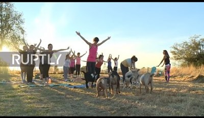 There's a Farm in Oregon That Lets You Take a Yoga Class With Goats