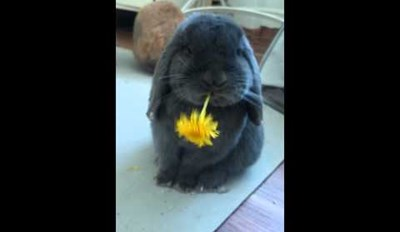 Super Cute Bunny Noms on a Delicious Flower