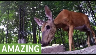 Get up Close and Personal With a Beautiful, Wild Doe