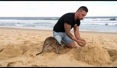 Adorable Baby Kangaroo Follows Her Human Wherever He Goes