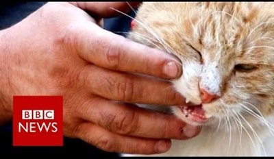 'The Cat Man of Aleppo' Is Taking Care of All the Pets Left Behind in Syria