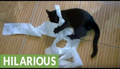 Basement Cat Makes a Huge Mess out of Toilet Paper