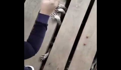 This Video of Raccoons Begging for Food Might Be the Creepiest Thing You See All Day