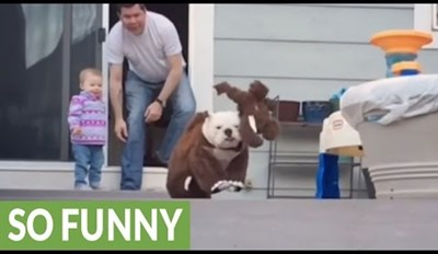 "Watch A ""Bully Mammoth"" Run and Leap in Slow Motion"