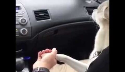 This Sweet Pup Has to Hold Her Human's Hand in the Car to Feel Safe