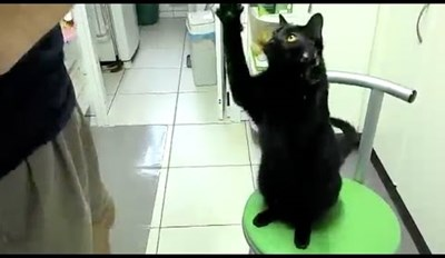 This Adorable Compilation Proves That Black Cats Are Pawesome