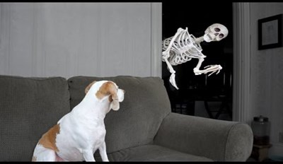 "Human Repeatedly Tries to ""Scare"" His Dog With a Fake Skeleton"