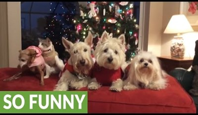 Family of Pets Takes Awhile to Pose for Their Christmas Card Photo