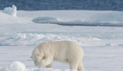 Caption This Photo for International Polar Bear Day!