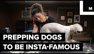 Get an Inside Look at a Day in the Life of a Famous Dog Groomer