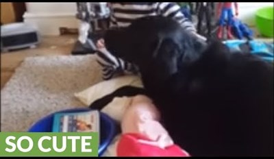 Sweet Little Boy Serenades His Dog With a Song