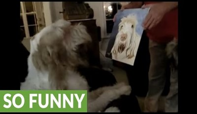 Watch This Dog's Delightful Reaction to Seeing a Portrait of Himself