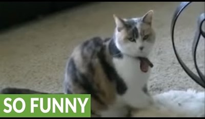 Cat and Human Team up to Hypnotize the Dog and Make Him Fall Asleep