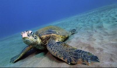 Caption Contest: It's World Turtle Day!