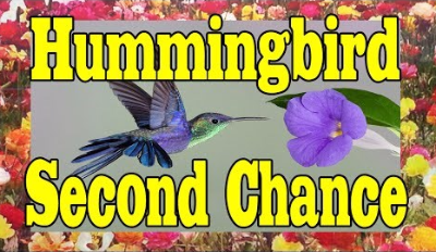Watch This Touching Hummingbird Recovery to Feel Like You Can Do Anything