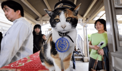 Find Out Why Thousands in Japan Said Goodbye to This Special Cat Yesterday