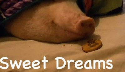 5 Animals Who Woke Up to Find That Their Dreams Have Come True